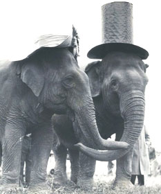 Elephants in hats