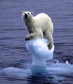 Polar bear clinging to melting ice