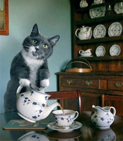 Tea party cat